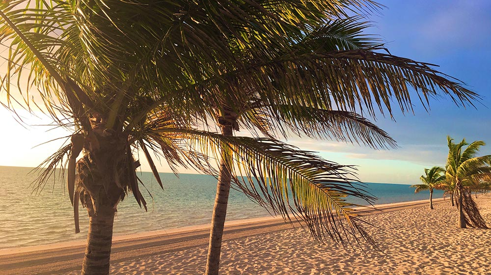Palm Trees in Turks and Caicos